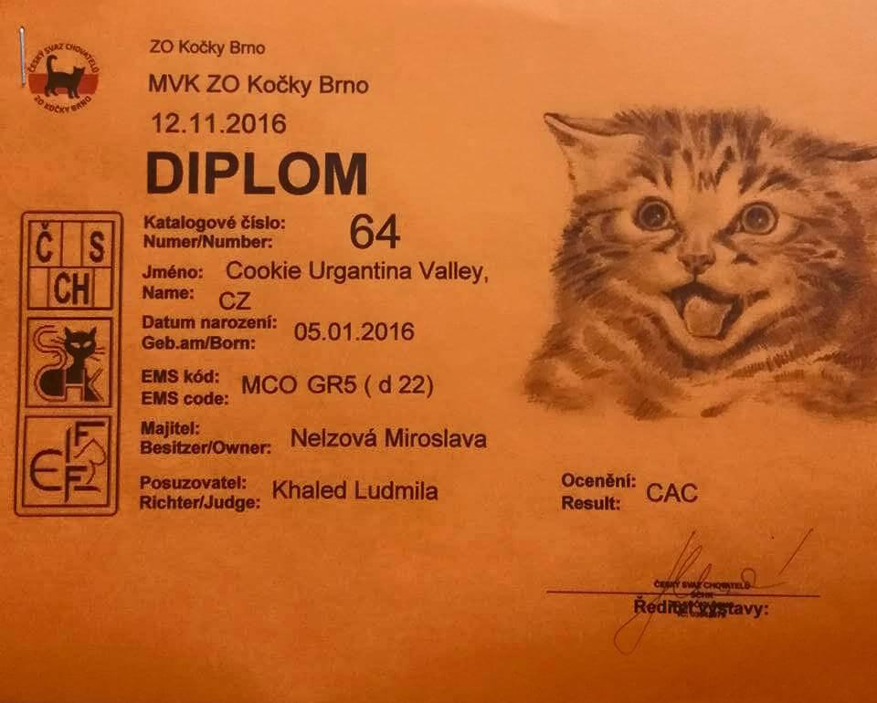chovatelská stanice mainská mývalí kočka Cookie Urgatina Valley. CZ Kladno Gabzi a Vinet CZ (8)