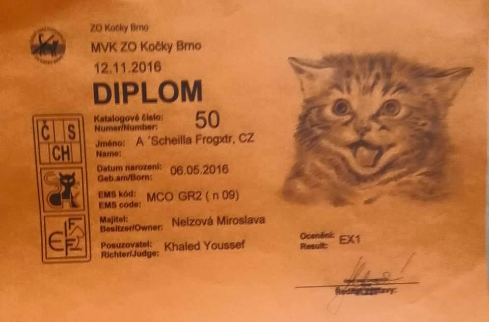 chovatelská stanice mainská mývalí kočka A´scheilla Frogxt. CZ Kladno Gabzi a Vinet CZ (20)