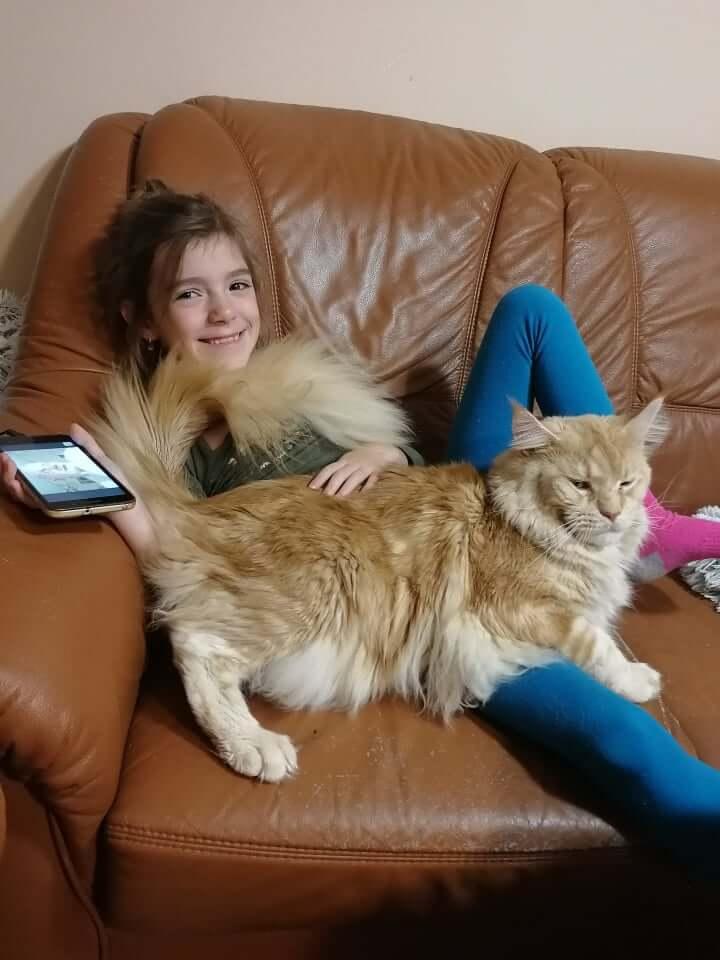 chovatelská stanice mainská mývalí kočka Cookie Urgatina Valley. CZ Kladno Gabzi a Vinet CZ (17)