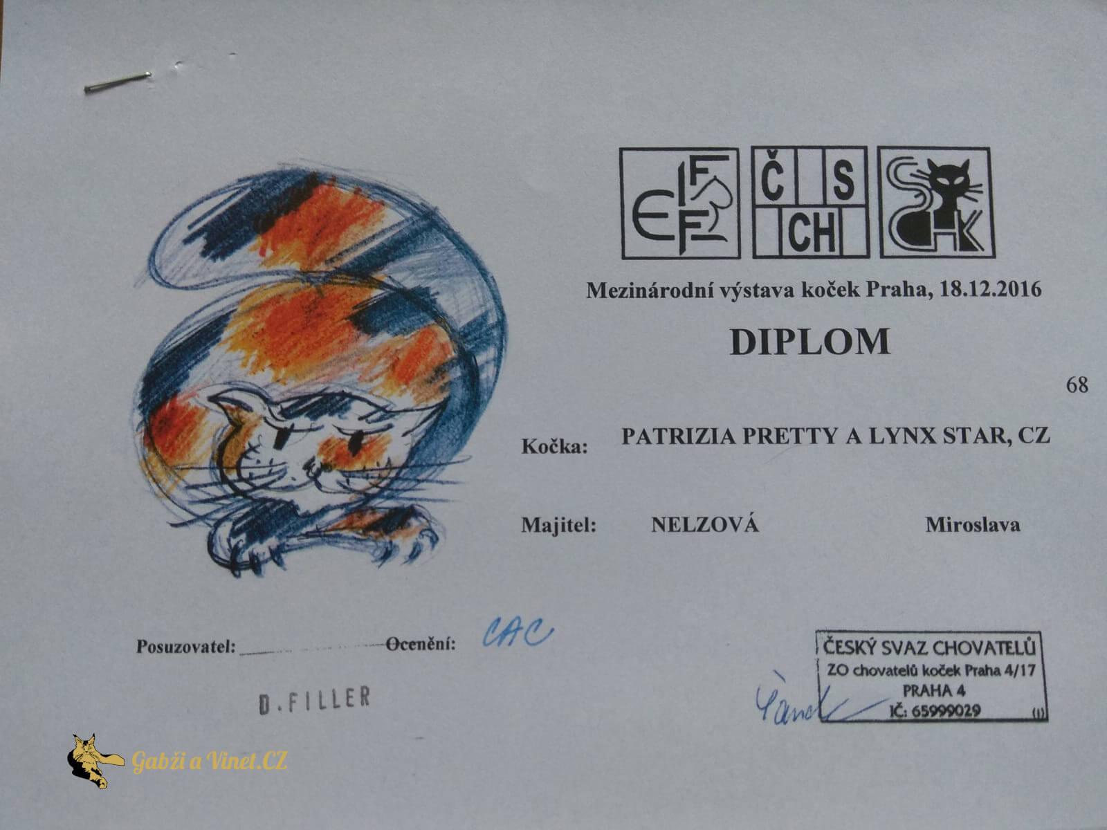 chovatelská stanice mainská mývalí kočka Patrizia Pretty A Lynx Star.CZ Kladno Gabzi a Vinet CZ (10)
