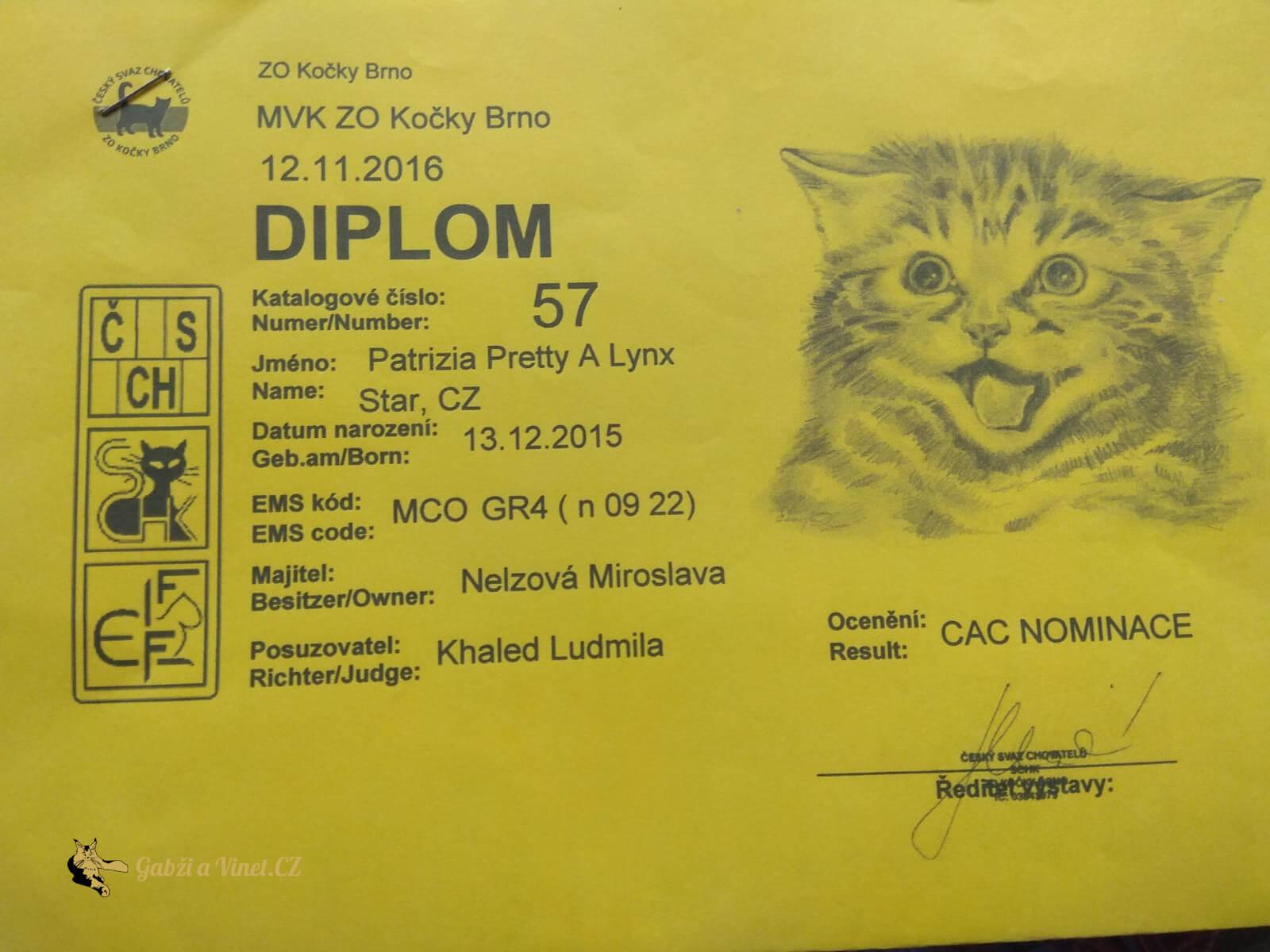 chovatelská stanice mainská mývalí kočka Patrizia Pretty A Lynx Star.CZ Kladno Gabzi a Vinet CZ (9)