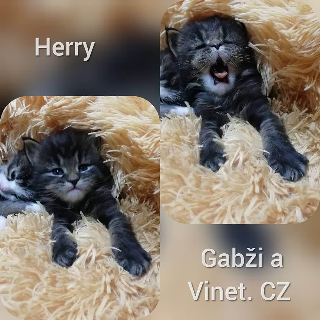 Gabzi a Vinet.CZ - odchovy chovatelská stanice Kladno (1)
