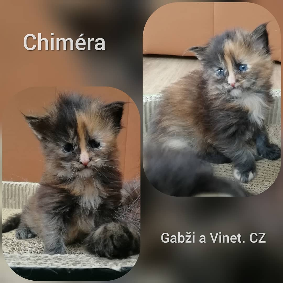 Gabzi a Vinet.CZ - odchovy chovatelská stanice Kladno (2)