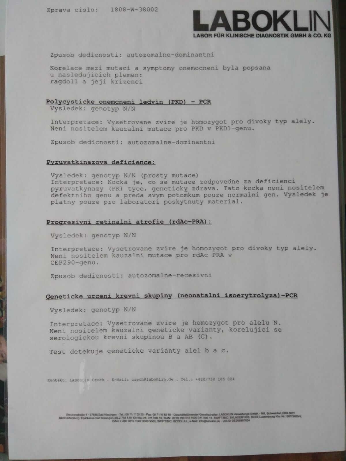 chovatelská stanice mainská mývalí kočka Bambi Lion Kladno Gabzi a Vinet CZ (15)